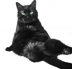 Oscar il gatto nero
